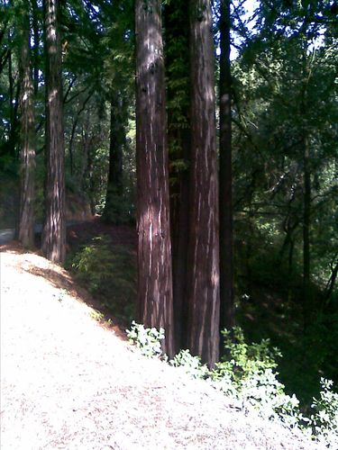 1_Kings_Mountain_Redwoods
