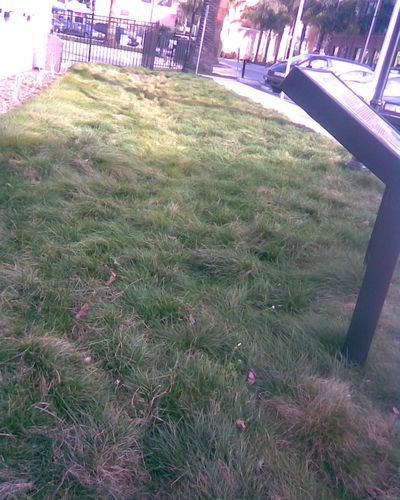 Grassy Swale for Runoff- RWC  Post Office