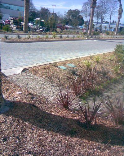 Grassy Swale for Runoff #1, Menlo Park Office Park