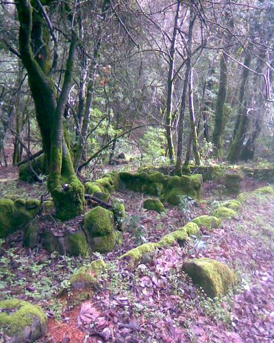 Old Moss-covered Foundation